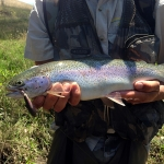 Rainbow Trout on Prorotype Five-0 Minnow