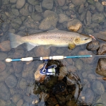 55cm Hen caught on the new Five-0 Minnow